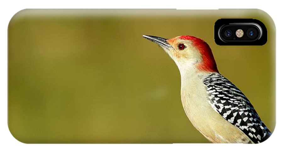 American IPhone X Case featuring the photograph Red Bellied Woodpecker by Sabrina L Ryan