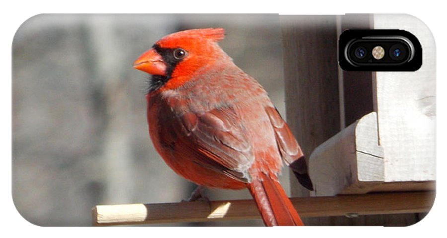 Cardinal IPhone X Case featuring the photograph Red Birds by Terry Lee