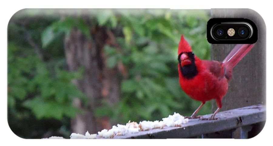 Cardinal IPhone X Case featuring the photograph Red Cardinal by Edith Jones