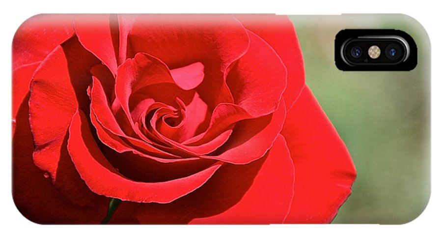 Flower IPhone X Case featuring the photograph Red Carpet Rose by Susan Herber