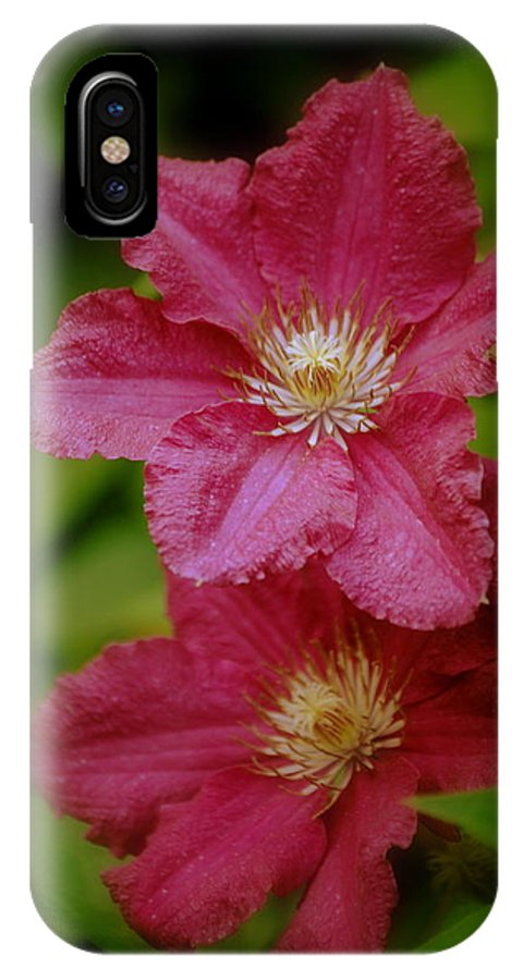 Flower IPhone X Case featuring the photograph Red Clematis Flowers by Nathan Abbott