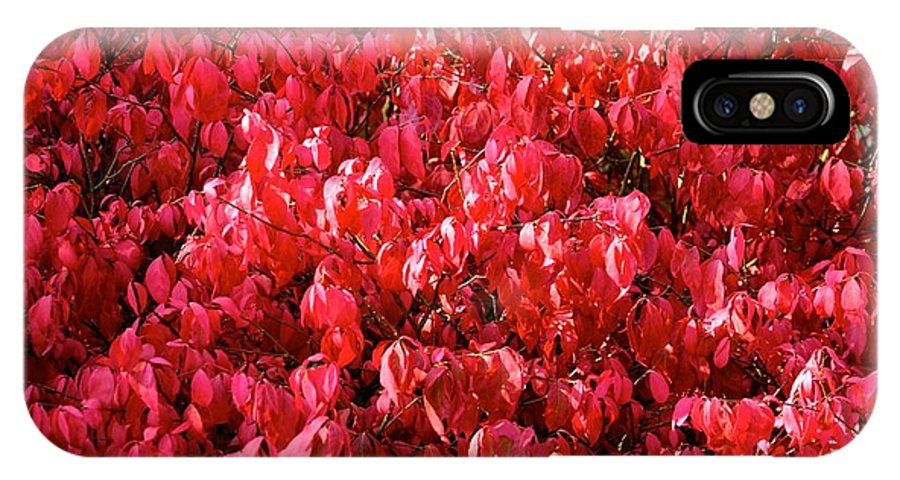 Leaves IPhone X Case featuring the photograph Red Fall by Stephanie Bland