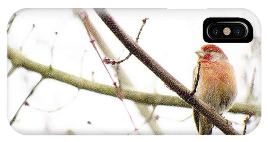Finch IPhone X Case featuring the photograph Red Finch In Snow by Rebecca Cozart