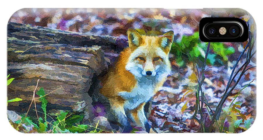 Fox IPhone X Case featuring the painting Red Fox At Home by John Haldane