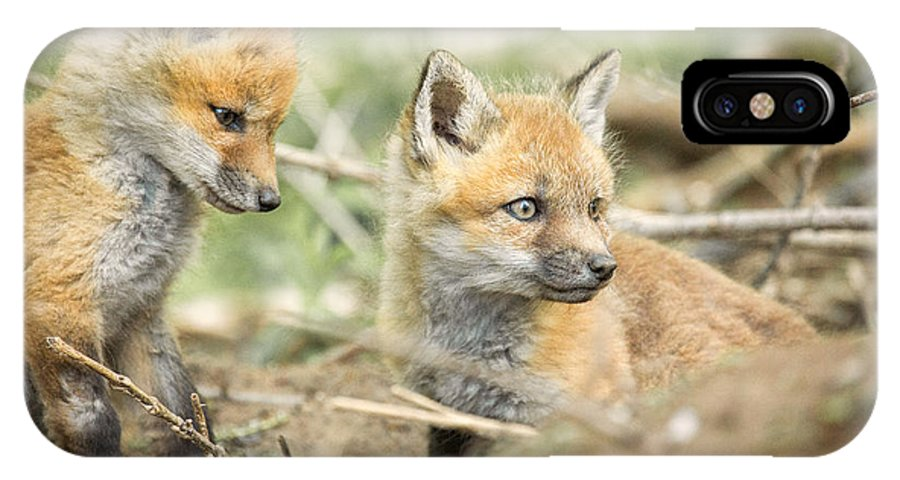 Red IPhone X / XS Case featuring the photograph Red Fox Kits by Everet Regal