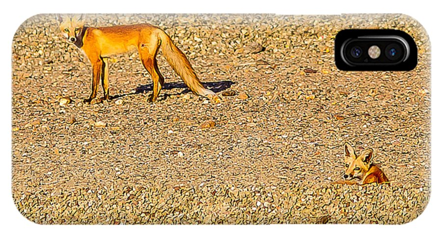 Red Foxes Nature Outdoors Wildlife All Prints Are Available In Prints IPhone X Case featuring the photograph Red Foxes by Brian Williamson
