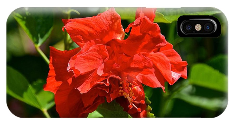 Hibiscus IPhone X Case featuring the photograph Red Hibiscus by Carol Bradley