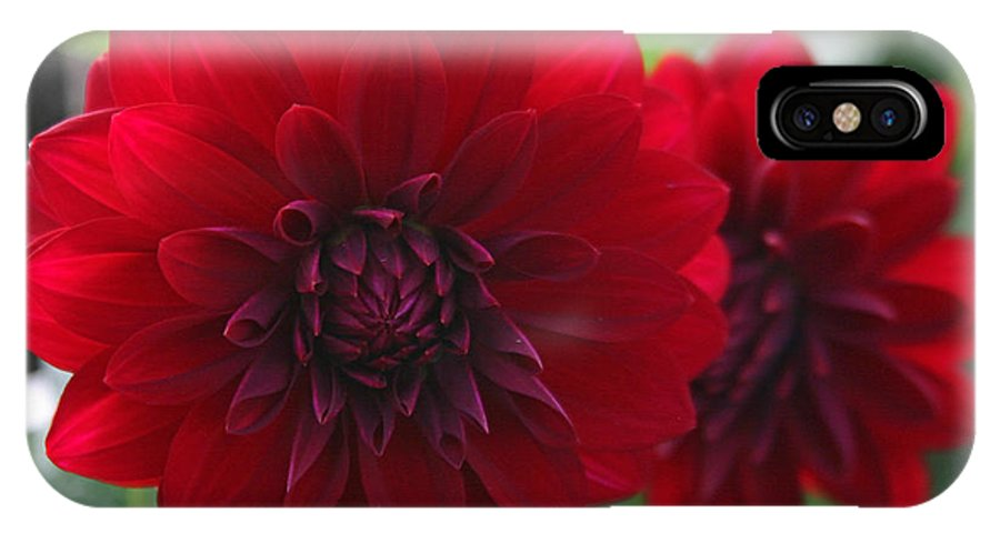 Flowers IPhone X Case featuring the photograph RED by Hugh Carino