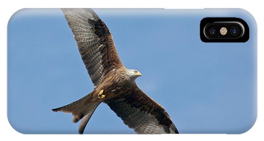 Red Kite IPhone X Case featuring the photograph Red Kite In Flight by Gary Eason