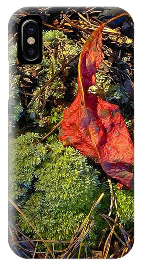 Red IPhone X Case featuring the photograph Red Leaf On Moss by Douglas Barnett