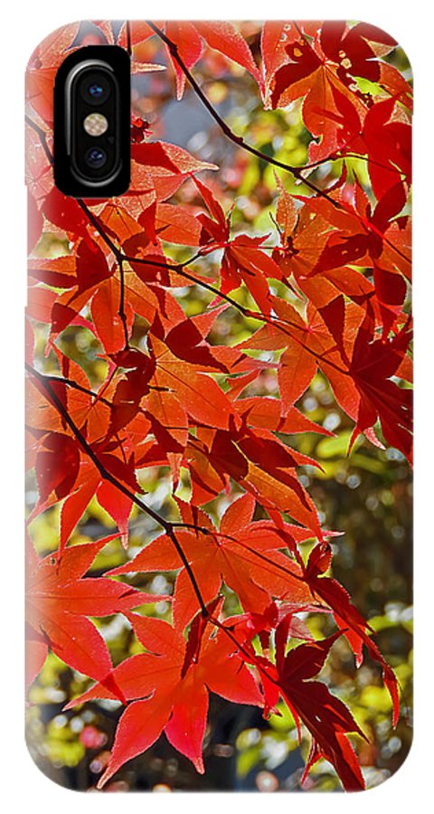 Nature IPhone X Case featuring the photograph Red Leaves 1 by Robert Mitchell