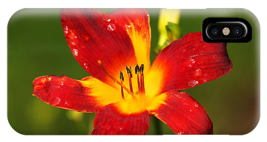 Bloom IPhone X Case featuring the photograph Red Lily by Charles Feagans