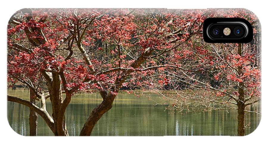 Red Maple IPhone X Case featuring the photograph Red Maple by Maria Urso