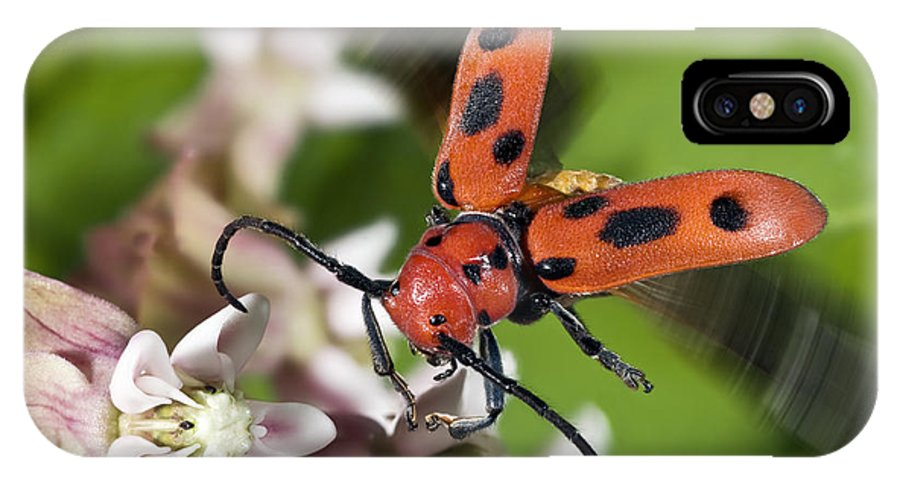 Animal IPhone X / XS Case featuring the photograph Red Milkweed Beetle by Phil Degginger