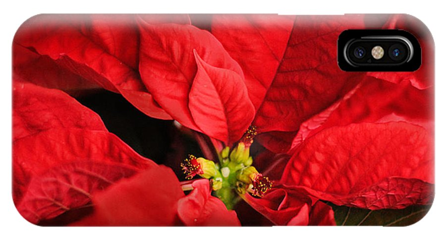 Winter IPhone X Case featuring the photograph Red Poinsettia 2 by Jai Johnson