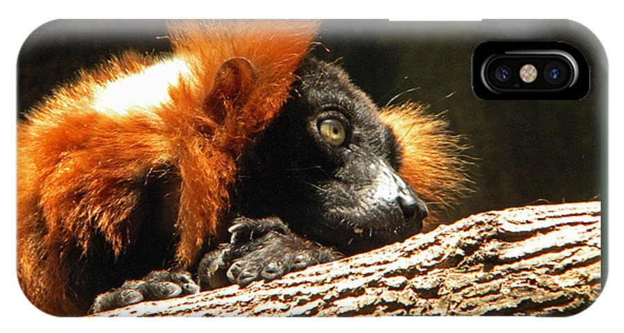 Lemur IPhone X Case featuring the photograph Red Ruffed Lemur by Phillip W Strunk