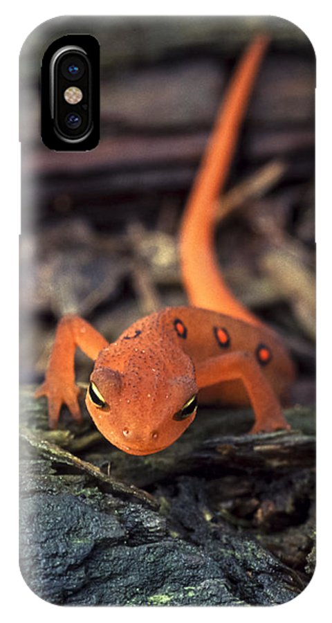 Red IPhone X Case featuring the photograph Red Spotted Newt by Richard Kitchen