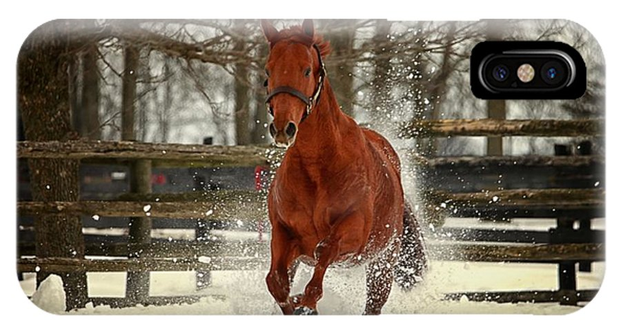 Thoroughbred Stallion Runs Through The Snow At Turnout At Abydos Farm In Prince Edward County IPhone X Case featuring the photograph Red Stallion by Darlene Shantz