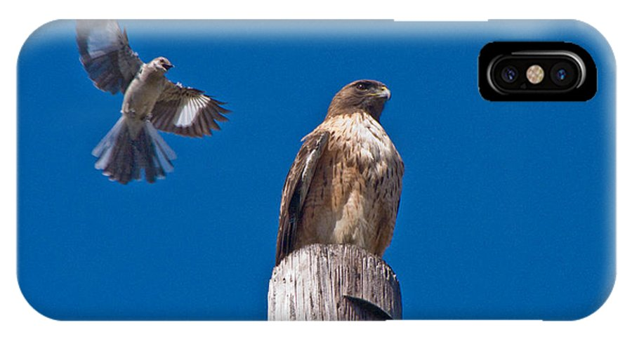 Red Tail Hawk IPhone X Case featuring the photograph Red Tail And Friend by Guillermo Rodriguez
