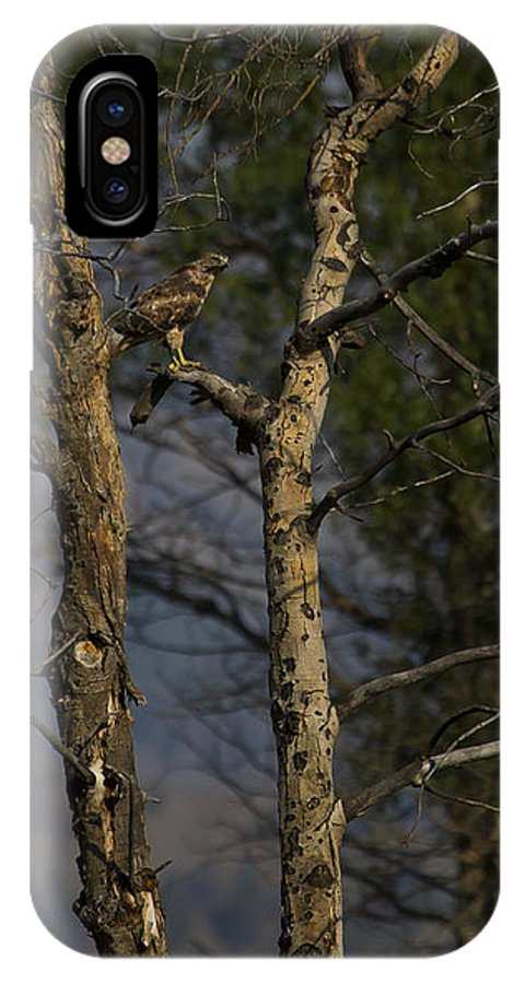 Hawk IPhone X Case featuring the photograph Red-tail Hawk  #0596 by J L Woody Wooden