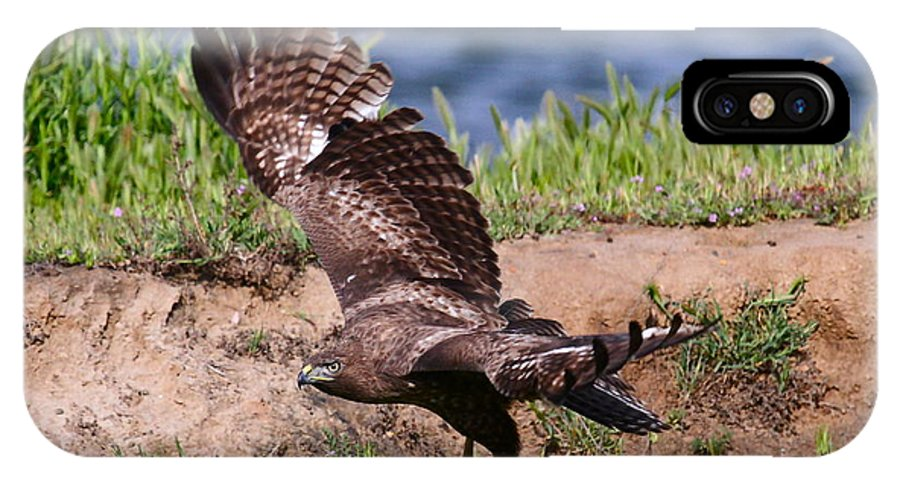 Red Tail Hawk Prints IPhone X Case featuring the photograph Red Tail On The Hunt by Paul Marto