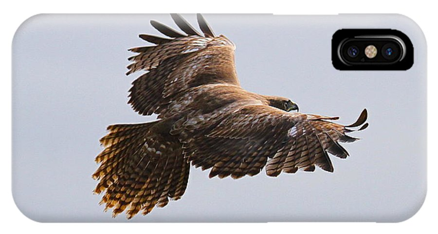 Hawk IPhone X Case featuring the photograph Red Tail Take Off by Paul Marto