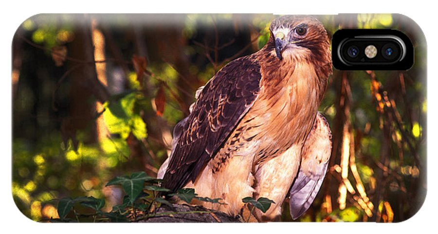 Hawk IPhone X Case featuring the photograph Red Tailed Hawk - 54 by Paul W Faust - Impressions of Light
