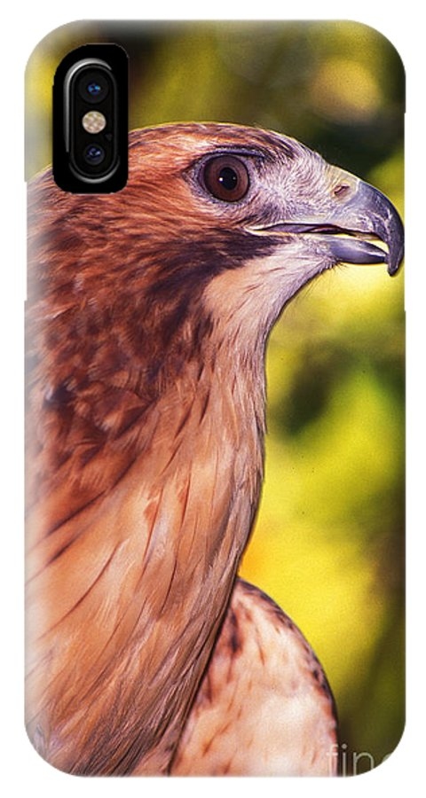 Hawk IPhone X Case featuring the photograph Red Tailed Hawk - 59 by Paul W Faust - Impressions of Light