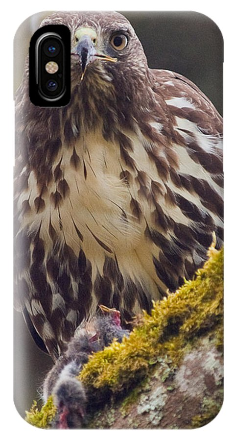 Red-tailed Hawk IPhone X Case featuring the photograph Red Tailed Hawk - Breakfast Close Up by Elaine Snyder
