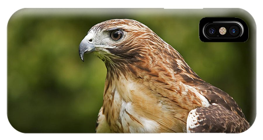 Bird IPhone X / XS Case featuring the photograph Red-tailed Hawk by David Davis