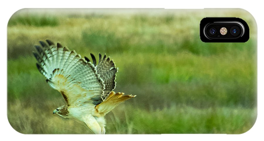 Red Tailed Hawk IPhone X Case featuring the photograph Red Tailed Hawk by Douglas Newman