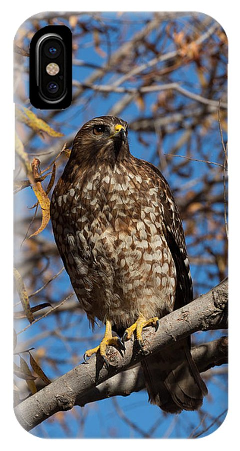 Red-tailed IPhone X Case featuring the photograph Red-tailed Hawk In A Willow Tree by Kathleen Bishop