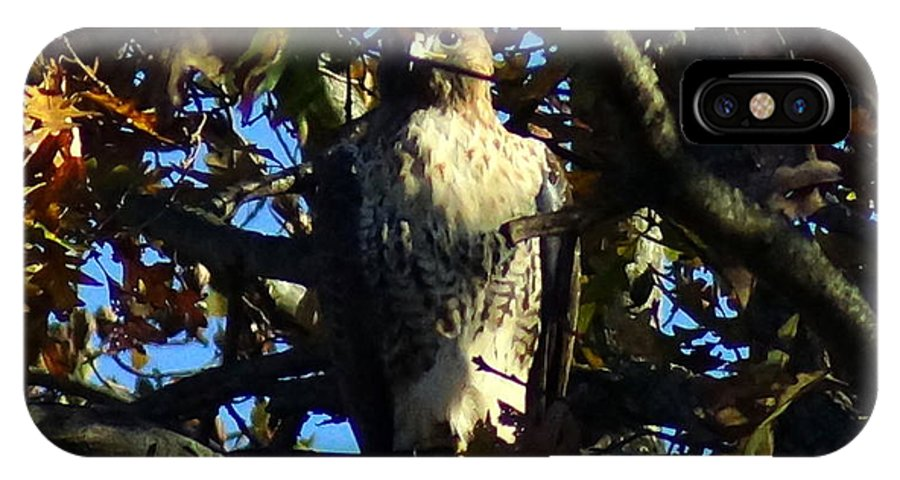IPhone X Case featuring the photograph Red Tailed Hawk In Tree by Kandids By Katy