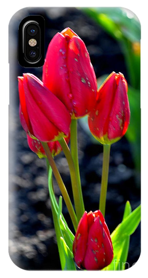 Tulips IPhone X Case featuring the photograph Red Tulips by Pravine Chester