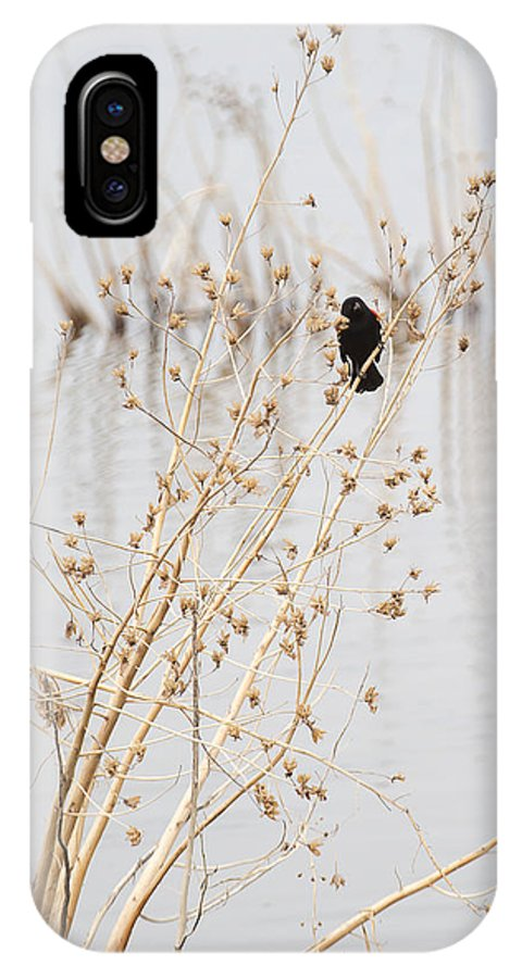Red Wing Black Bird IPhone X Case featuring the photograph Red Wing Black Bird by Deb Buchanan