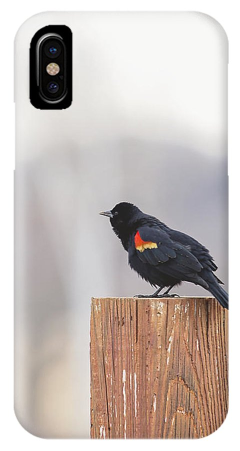 Red Wing Black Bird IPhone X Case featuring the photograph Red Wing Black Bird On Post II by Deb Buchanan