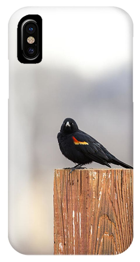 Red Wing Black Bird IPhone X Case featuring the photograph Red Wing Black Bird On Post IIi by Deb Buchanan