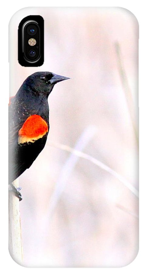 Hope Mills Nc IPhone X Case featuring the photograph Red-winged Blackbird - Colors by Travis Truelove