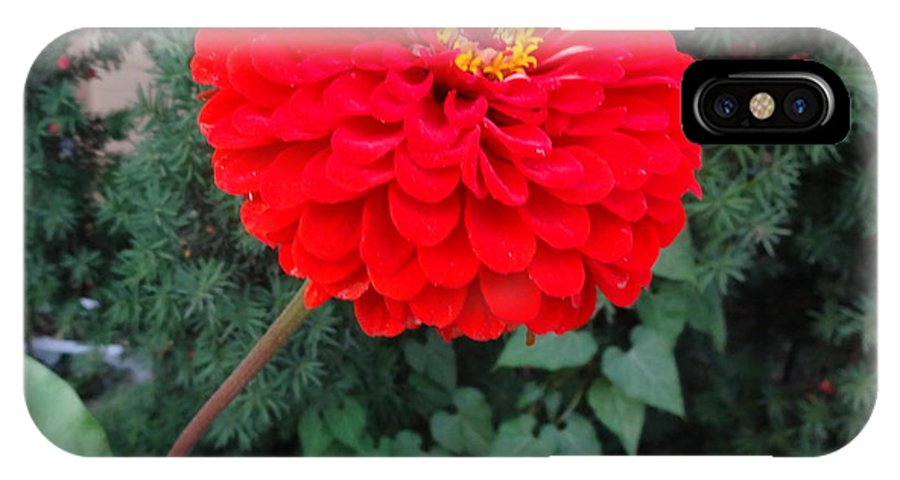 Red IPhone X Case featuring the photograph Red Zinnia 2 by Rod Ismay