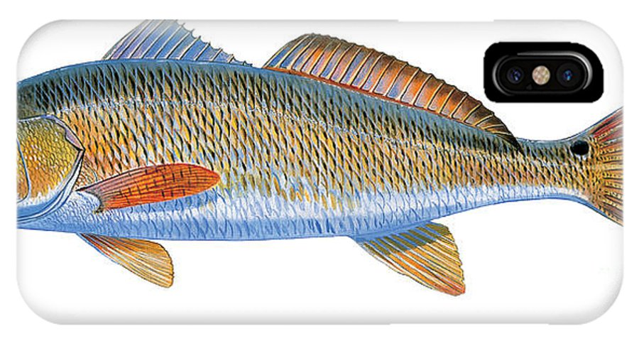 Redfish IPhone X Case featuring the painting Redfish by Carey Chen
