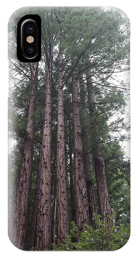 California IPhone X / XS Case featuring the photograph Redwood Fairy Ring Close by Nicholas Miller
