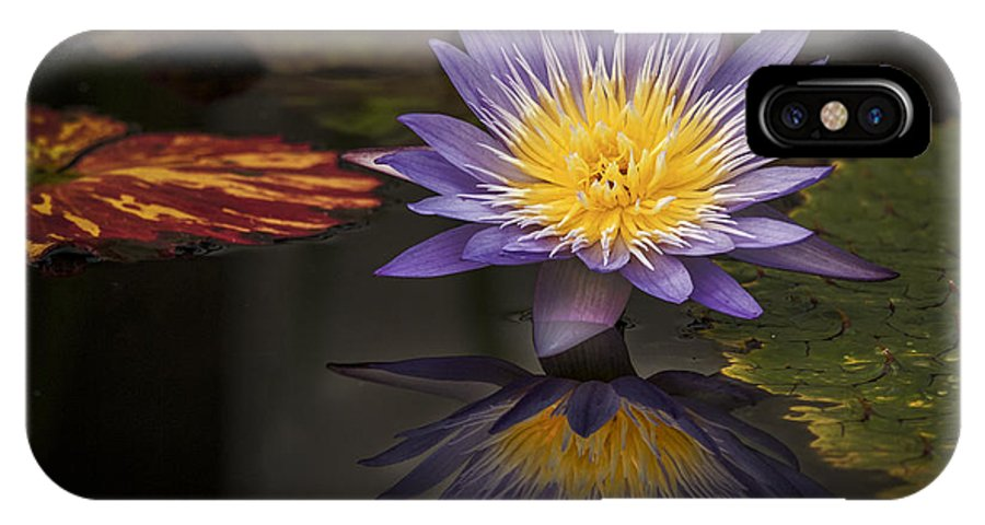 Pink Water Lily IPhone X Case featuring the photograph Reflective Water Lily Still Life by Jean Noren
