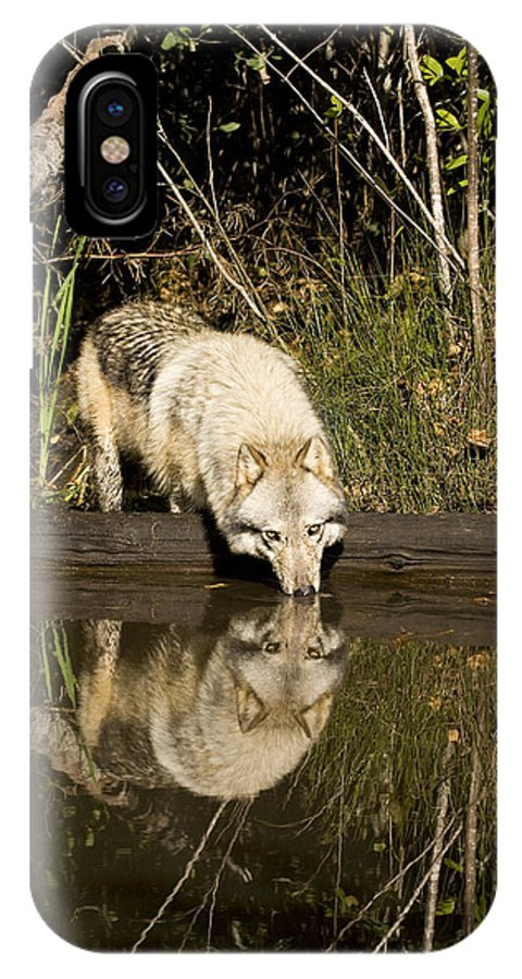 Wolf IPhone X Case featuring the photograph Refreshment by Jack Milchanowski