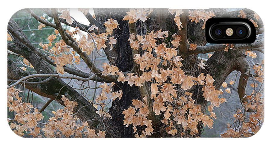 Tree IPhone X Case featuring the photograph Refusing To Let Go by Barb Dalton