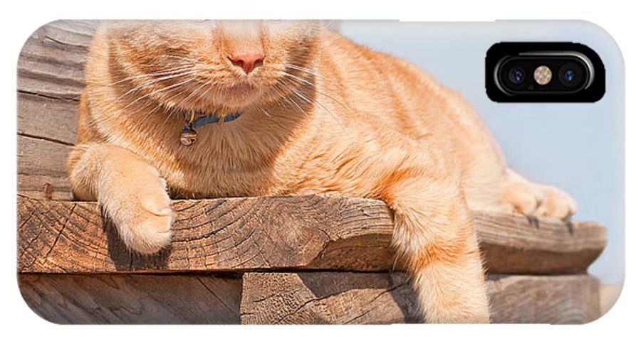 Cat IPhone X Case featuring the photograph Relaxing In The Sun by Sari ONeal