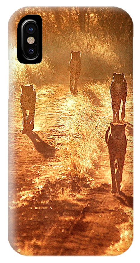 Cheetahs IPhone X Case featuring the photograph Reservoir Cats by Marc Levine