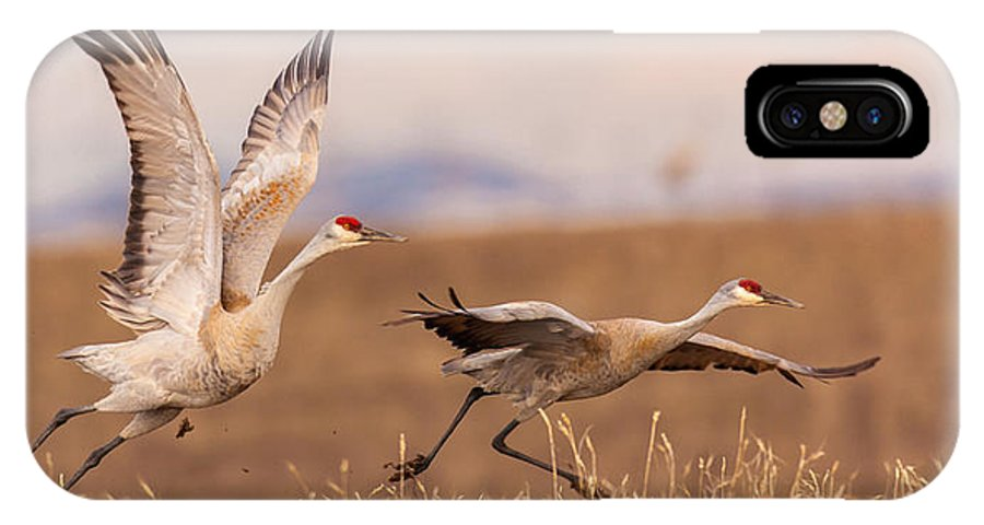 Sandhill Cranes IPhone X Case featuring the photograph Return To Yampa Valley by Kevin Dietrich