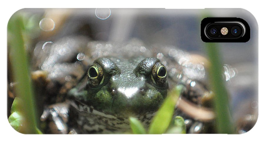 Frog IPhone X Case featuring the photograph Ribbit by Jeff Picoult