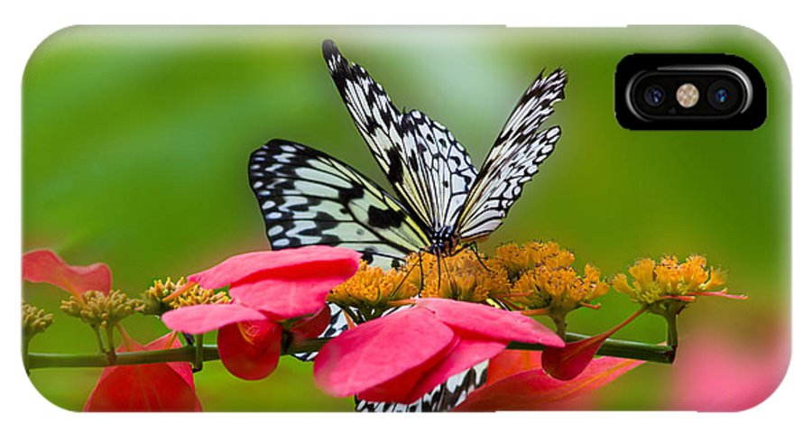 Butterflies IPhone X Case featuring the photograph Rice Paper Butterflies by TN Fairey