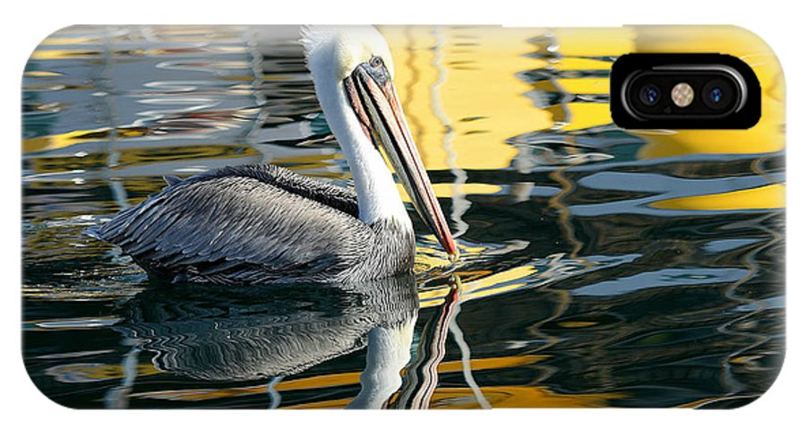 California Brown Pelican IPhone X Case featuring the photograph Ripples And Reflections 2 by Fraida Gutovich